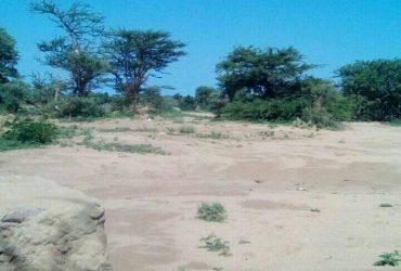 Dhul iib ah Xeedho Hargeisa Somaliland